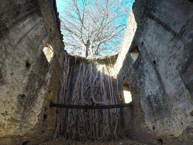 Vista interna da  igreja de  Bom Jesus do Matozinho , no distrito de Barra do Guaicuí,  MG, onde uma  arvore Gameleira nasceu na parede do altar da igreja.  ( Foto Joel Silva / Folhapress.)